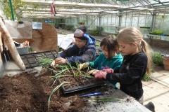 Salat pflanzen in den Osterferien