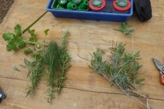Kräuterbasteleien in den Osterferien