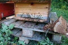 Bienenkiste / Sommer 2016 / Seidlhof