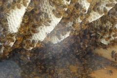 Bienenkiste_12