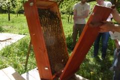 Bienenkiste_14