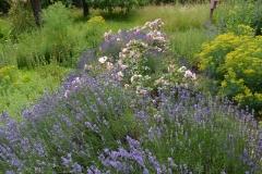 Lavendel und Rosen im Kräutergarten / Sommer 2016 / Seidlhof
