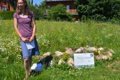 Miriam Ostermaier, Wildbienenexpertin / Sommer 2016 / Neunerberg