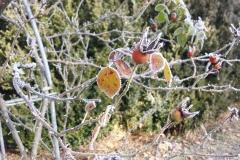 Frost am Seidlhof | Januar 2017