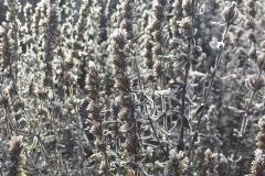 Frost im Kraeutergarten am Seidlhof | Januar 2017