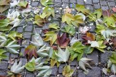 Herbstfaerbung_2015