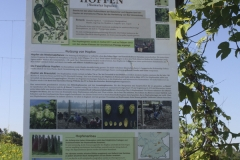 Hopfen am Neunerberg | Sommer 2016