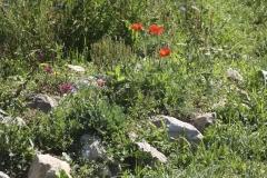 Steingarten mit Wildbienenblühpflanzen am Neunerberg | Sommer 2016