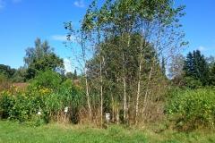 Nachwachsende Rohstoffe am Neunerberg | September 2016