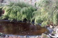 Zugefrorener Teich am Seidlhof | Januar 2017