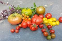 verschiedene Tomatensorten | 2016