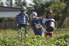 Kartoffelkäfer sammeln / Frühjahr 2016 / Neunerberg