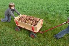 Aktionen_Naturlandkartoffeln_2011_05