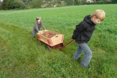 Aktionen_Naturlandkartoffeln_2011_06