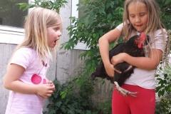 Unsere Schulhühner bei den Kindern...